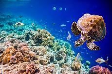 Unterwasser Tiere Malvorlagen Xing Korallen Nachwuchs Und Ihre Reise 187 Tierheilkunde