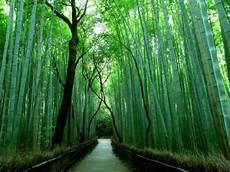 arredamento bambu arredare con il bamb 249 arredamento casa arredamento con