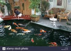 bassin koi interieur estanque koi interior en reigoldswil suiza foto imagen