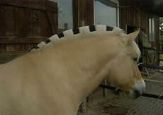 ausmalbilder pferde norweger frisiere ihren norweger ponys und kleinpferde