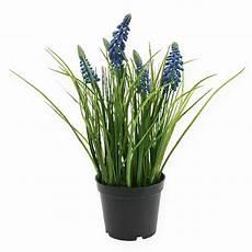 hyazinthen k 252 nstlich im topf blau 24cm kaufen in schweiz