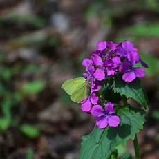 pflanzen niedrigere klassifizierungen pflanzen niedrigere klassifizierungen lilien pflanzen