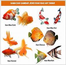 Gambar Foto Jenis Macam Nama Ikan Hias Air Tawar
