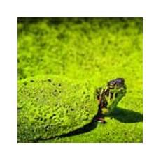 green painted turtle photograph by leeann mclanegoetz mclanegoetzstudiollccom