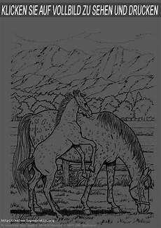 malvorlagen pferde 16 malvorlagen gratis
