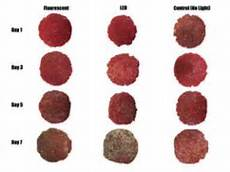 lighting type affects ground beef color