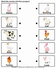 animals and their worksheets 14100 farm animals and their babies worksheet turtle diary