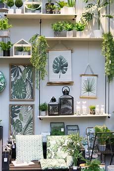 außergewöhnliche pflanzen wohnung exotische pflanzen f 252 r zuhause exotische pflanzen f r den