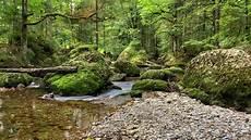 Malvorlagen Urwald Europa Mystischer Urwald In Europa Foto Bild Landschaft Bach