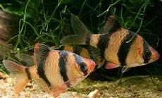 lebha kleinanzeigen aquarium fische zubeh 246 r deine