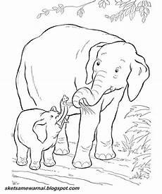 Sketsa Mewarnai Gambar Hewan Gajah Sketsa Mewarnai