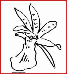 orquidea de venezuela para colorear dibujo de orquidea para colorear e imprimir