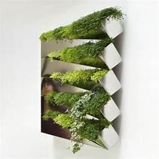 Blumenkästen Für Die Wand - miroir en herbe f 252 r die wand compagnie blumenkasten
