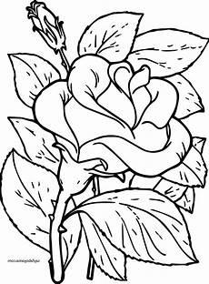 Blumen Malvorlagen Xl Neu Blumen Ausmalen With Images Flower Coloring Pages