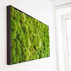 moosbilder für die wand moos collage 50x160cm in 2019 wandgarten moosbilder