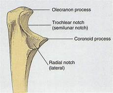 Teknik Radiografi Olecranon Dengan Variasi Penyudutan