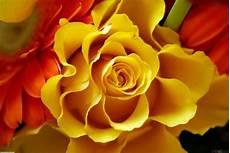 Paling Keren 30 Gambar Wallpaper Bunga Orange Richi