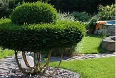 wann buchsbaum schneiden gartengestaltung buchsbaum natacharoussel