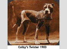 Facts About the Pitbull Terrier Dog