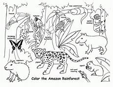 free coloring pages of animals in the rainforest 17397 free printable rainforest coloring pages coloring home