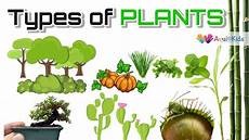 types of plants science for kids trees herbs climbers