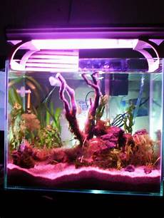 Make Your More Meaningful New Hobby Quot Aquascape