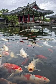 La Carpe Koi Id 233 Es De Jardin Carpe Koi Koi Japonais