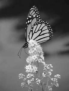 photo romantique noir et blanc the blou project amour du noir et blanc