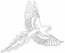 Ausmalbilder Erwachsene Papagei Ausmalbilder Malvorlagen Papagei Kostenlos Zum