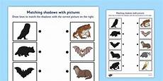 nocturnal animals worksheets 13983 nocturnal animals shadow matching worksheet nocturnal animals coloring pages