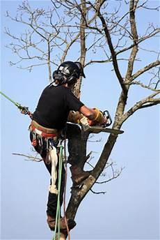 devis elagage arbre elaguer r 233 guli 232 rement permet d adapter le volume et l