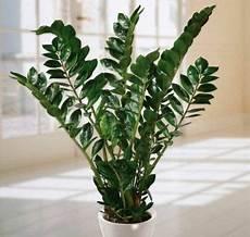 Welche Zimmerpflanzen Brauchen Wenig Licht - welche zimmerpflanzen brauchen wenig licht houseplants