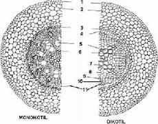 Struktur Dan Fungsi Jaringan Tumbuhan Serta Pemanfaatannya