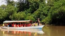 Gambar Wisata Hutan Mangrove Surabaya Gambar Barumu