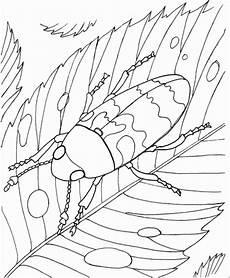 kleiner kaefer auf einem blatt ausmalbild malvorlage tiere