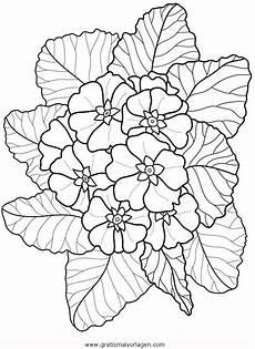 Malvorlagen Gratis Natur Primeln Gratis Malvorlage In Blumen Natur Ausmalen