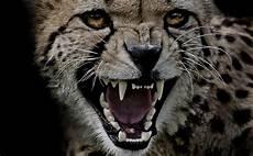 Schlechte Laune Foto Bild Tiere Zoo Wildpark