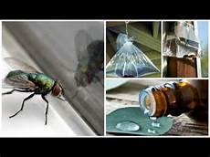 chasser les mouches comment chasser les mouches naturellement de chez vous