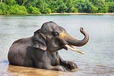 les animaux en voie de disparition les 10 animaux en voie de disparition tout savoir