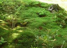 Japanischer Garten Moose