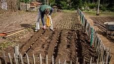 kartoffelanbau so wird s was mit der knolle ndr de
