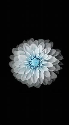 iphone 7 flower wallpaper 4k flower black and white wallpaper sc iphone6splus