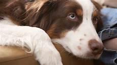 hunderassen mit bild hunderassen alle hunderassen a z mit bild und namen
