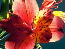sfondi fiore sfondi per desktop fiori