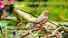 Wow 17 Gambar Jenis Burung Zebra Finch Gani Gambar