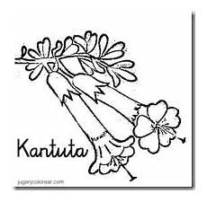 dibujo de la flor nacional de venezuela colorear dibujos infantiles bolivia escudo bandera y flor nacional kantuta para colorear