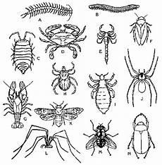 igcse biology notes general characteristics and