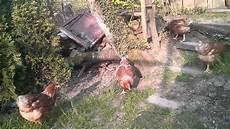 Hühner Im Garten - h 252 hner im garten auslauf
