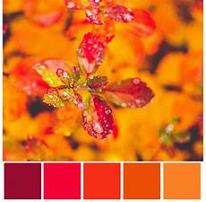 light coral html color codes and color scheme color