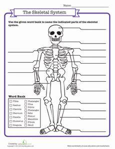 skeletal system quiz classroom science social studies